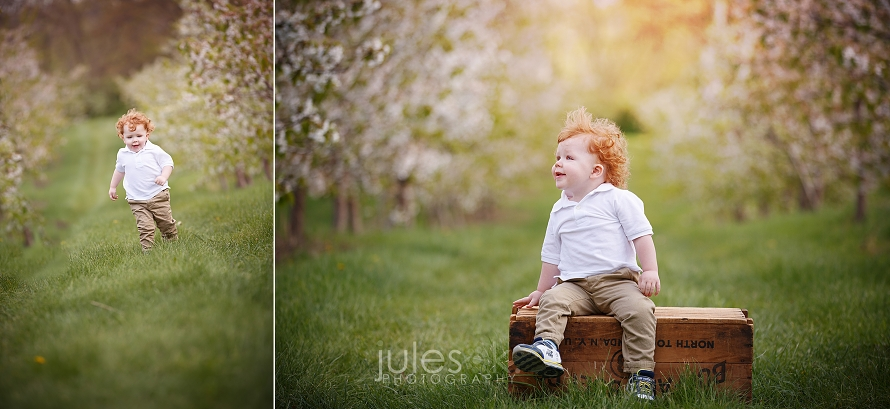 Apple Blossoms Photo Shoot